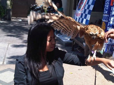 Bella and owl