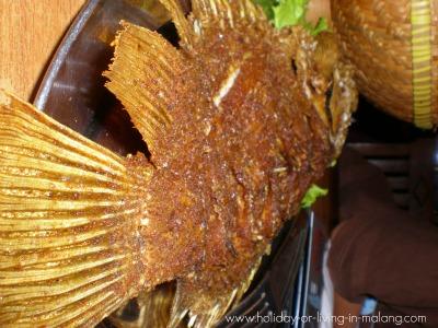 Fried gurami fish