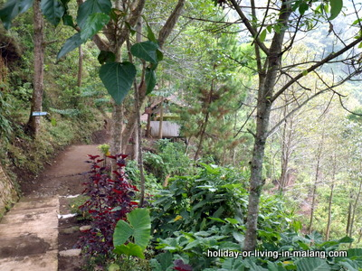 Path to Coban Pelangi in Malang