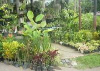 flowers in flowers market malang