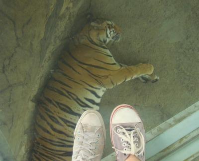 Jatim Park Ii Recreation Park In Batu With Secret Zoo And Animal Museum